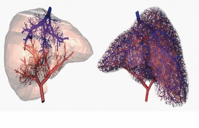 кръвоносни съдове